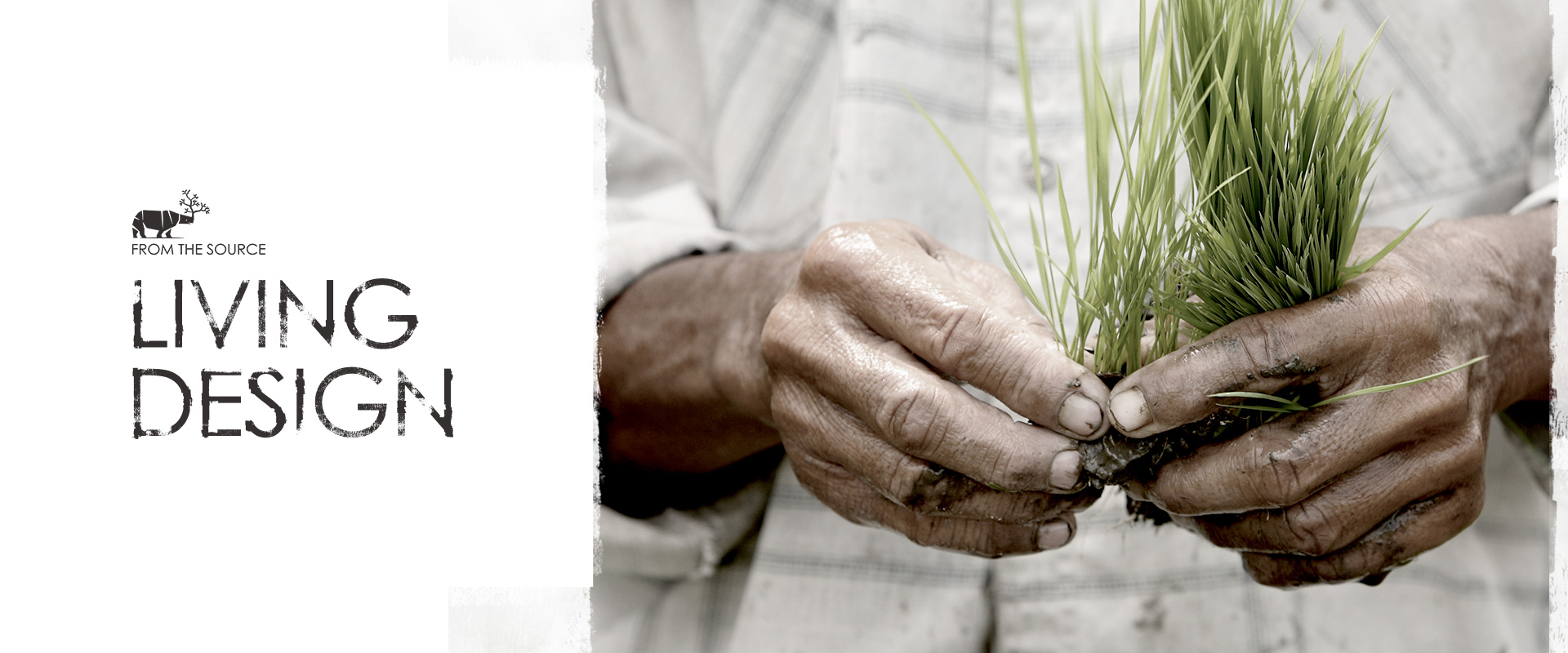 From The Source Promo Photo of hands holding grass